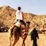 Horse riding Hurghada
